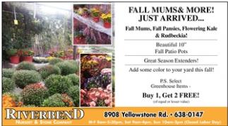 Fall Mums & More!