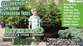 Just Arrived! Container Evergreen Trees