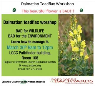 Dalmatian Toadflax Workshop