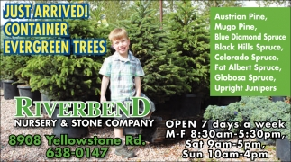 Just Arrived Container Evergreen Trees